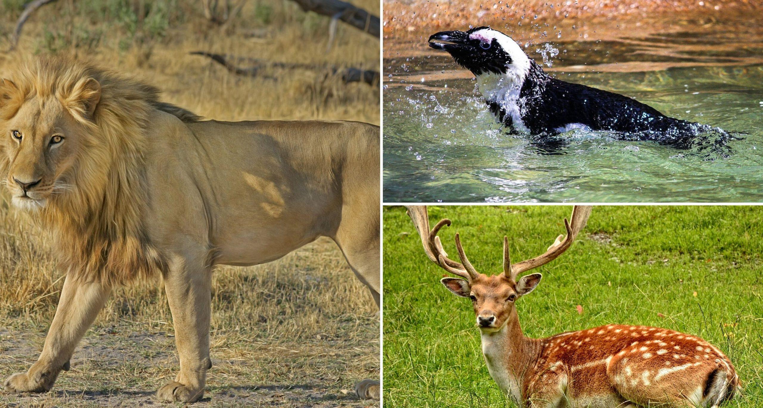 Animals use International Lockdowns to Explore the Cities